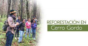 Reforestación en Cerro Gordo