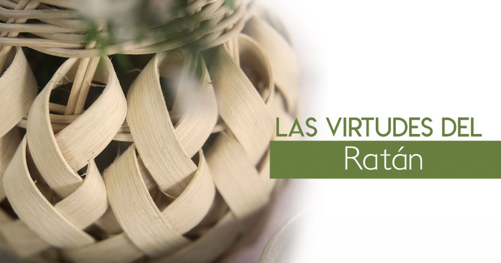 Las virtudes del Ratán